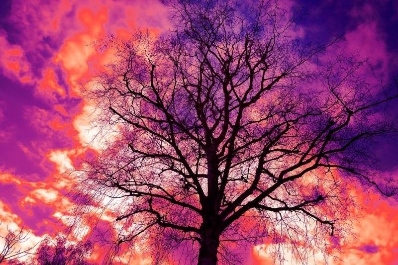 """""""Cada Árvore é um Ser para Ser em Nós"""" – Poema de António Ramos Rosa"""