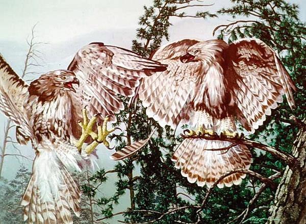 Ilusões de Óptica da Natureza