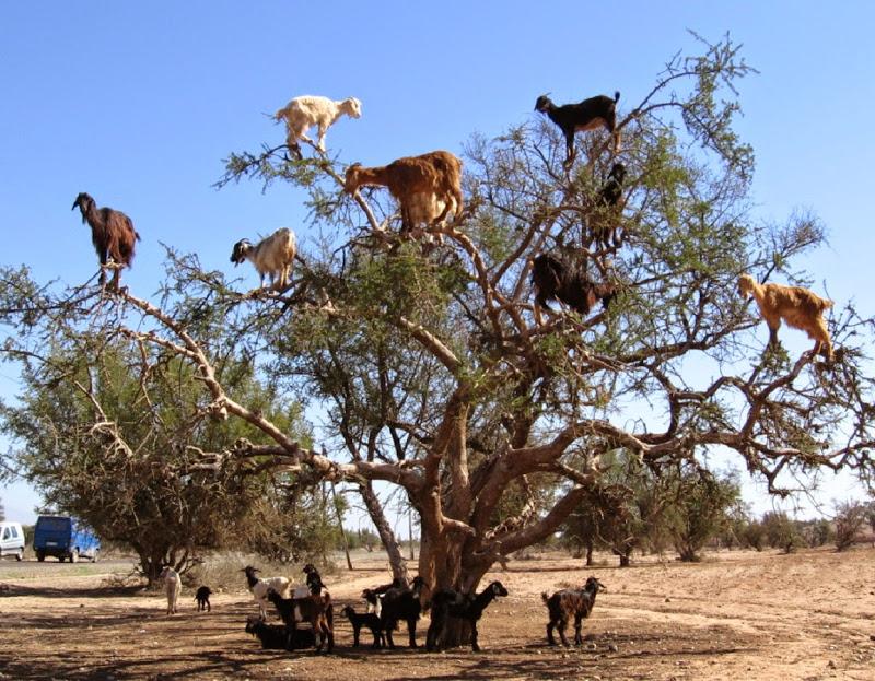 Dia Internacional de Subir às Árvores (28 de Março)