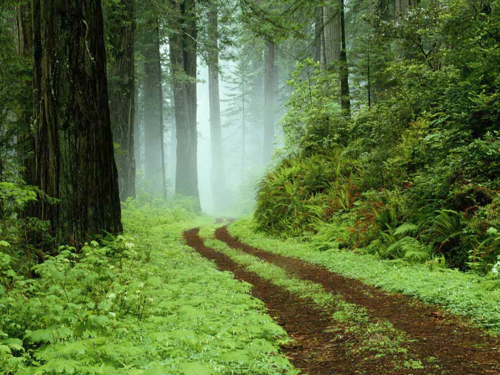 Floresta Portuguesa está a Regenerar-se Espontaneamente