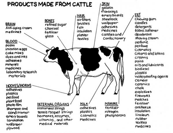 Conclusão: Não Existem Vegans…