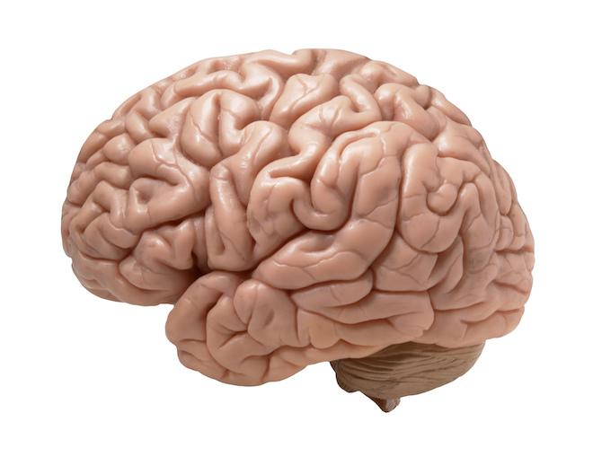 Porque Está o Nosso Cérebro a Diminuir?
