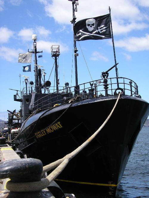 Sea Shepherd Atrapalha a Caça Japonesa à Baleia na Antárctida