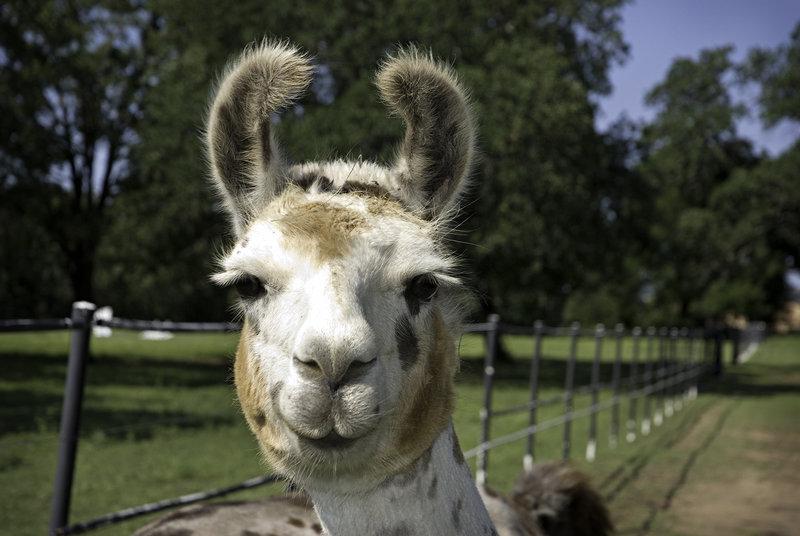 Os Animais também Sorriem! – Smiling Animals