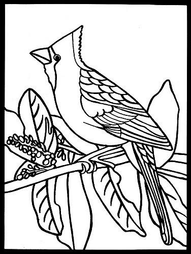 Pássaros de Audubon para Colorir Audubon's Birds Coloring Pages