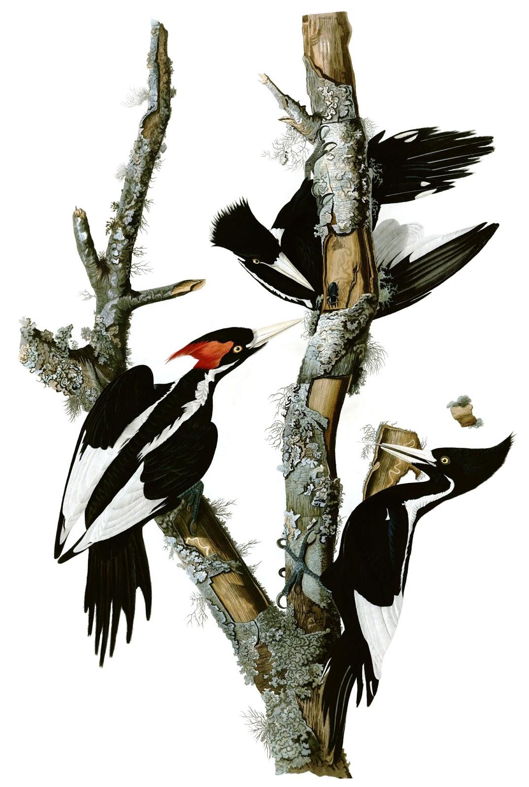 As Aves de John James Audubon