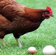 Máquina de Ovos…