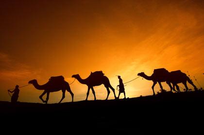 """Quando as """"Eco-Ideias"""" Vão Longe Demais: Empresa quer Matar Camelos para Reduzir CO2"""