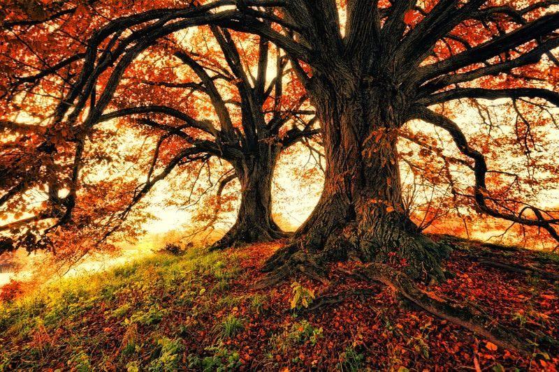"""""""Velhas Árvores"""" – Poema de Olavo Bilac"""