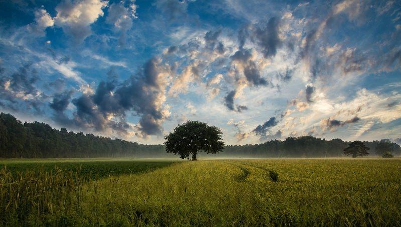 """""""Árvore Verde"""" – Poema de Fernando Pessoa"""