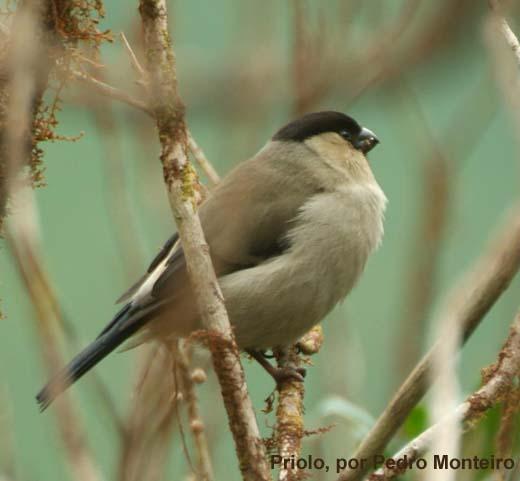 As Aves dos Açores [vídeo]