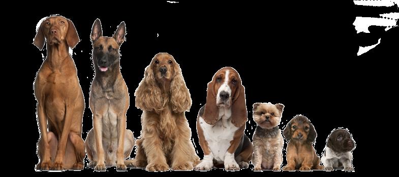 Segredos do Pedigree dos Cães – Documentário Legendado