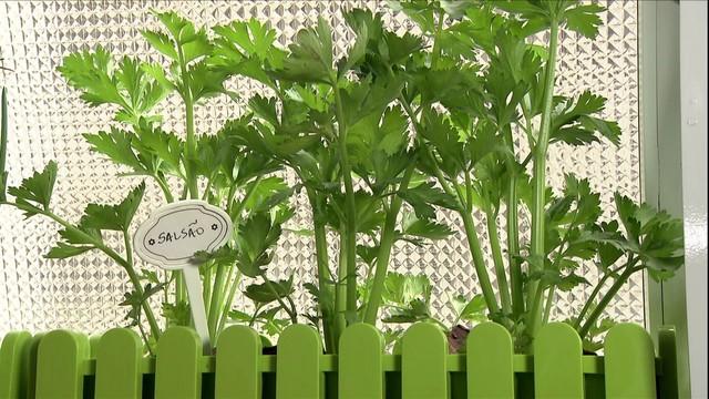 Aprenda a Criar uma Horta Dentro do Apartamento [Vídeo]