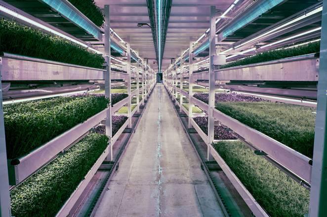Antigo Abrigo da II Guerra Mundial Transformado em Horta Hidropónica