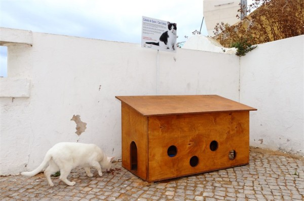 Albufeira Instala Abrigos para Gatos