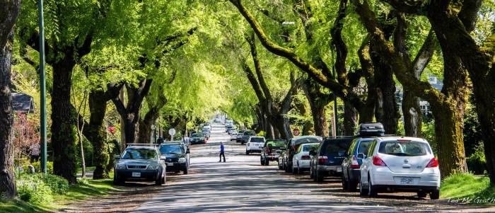Estudo Defende que Morar Perto de Árvores Reduz Casos de Depressão