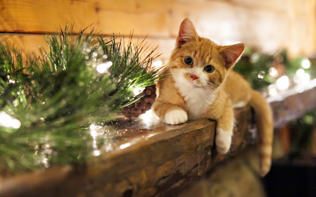 Ideias para um Natal mais Sustentável