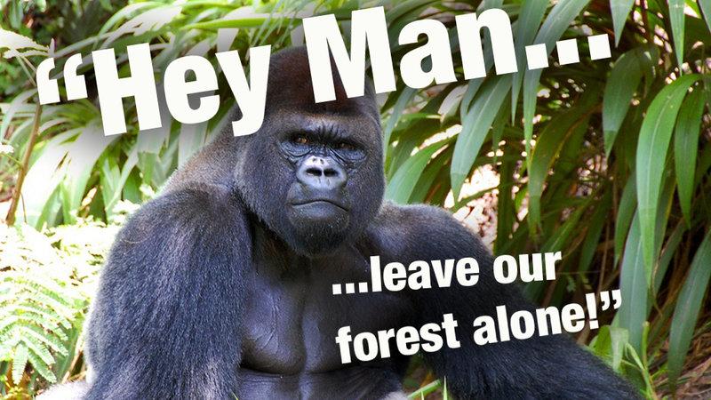 Não às Plantações de Chá ao Lado do Parque Nacional dos Gorilas!