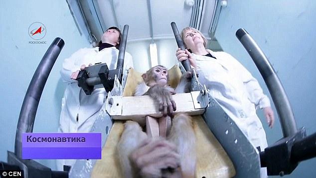 Rússia Vai Enviar Macacos para Marte em 2017 com Bilhete apenas de Ida