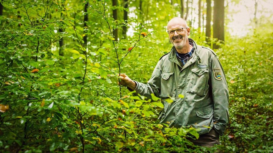Guarda Florestal Alemão Afirma que as Árvores Também Têm Redes Sociais