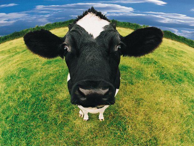 Veganismo Pode Tornar-se num Direito Humano em Ontário, Canadá