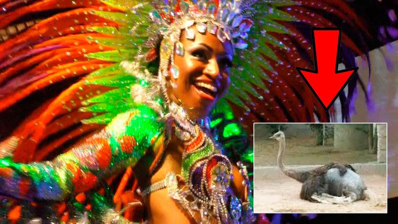Sabe de Onde Vêm as Penas para o Carnaval do Brasil?