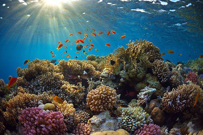 Os Jardineiros de Corais: Replantar Corais na Tailândia [Documentário]