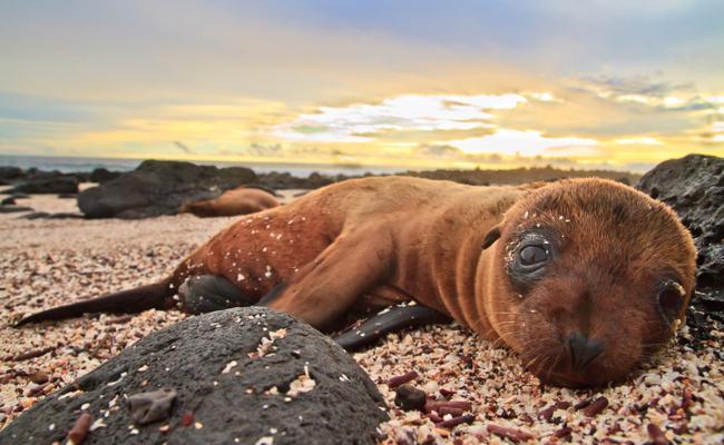 Crias de Leões-Marinhos Subnutridas por Causa do Consumo Humano de Óleo de Peixe