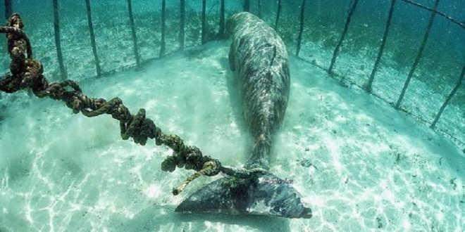 Animais Presos em Jaulas Submarinas na Indonésia