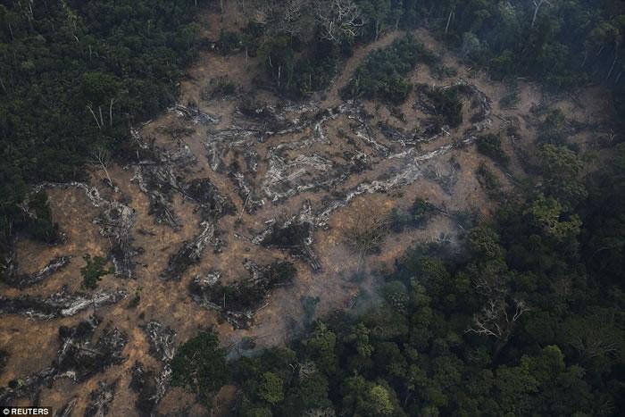 Brasil Perde Área de Floresta Igual a 2 Campos de Futebol, por Minuto