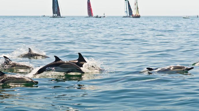 Golfinhos de Regresso ao Tejo [Vídeo]