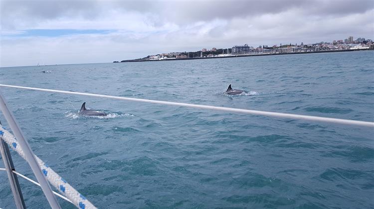 Golfinhos aparecem na Baía de Cascais [Vídeo]
