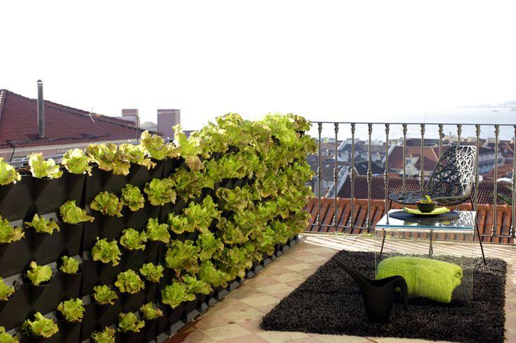 Ter uma Horta Vertical em Casa – Minigarden