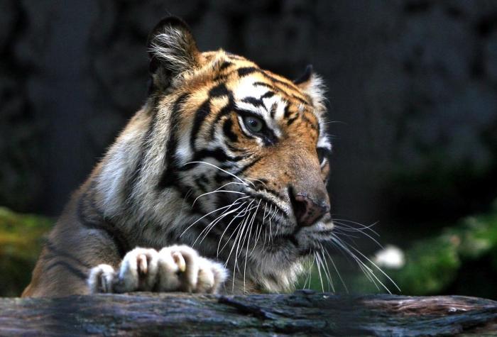"""O """"Zoo da Morte"""" na Indonésia, onde 100 Animais Morreram em Menos de 1 ano"""