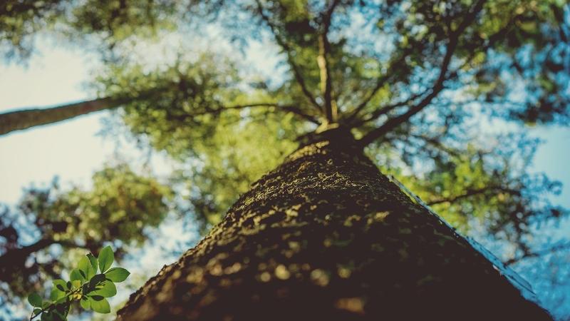 As Plantas também Têm Internet – Wood Wide Web