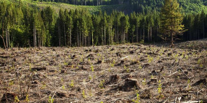 Noruega Torna-se o 1º País com Compromisso de Desflorestação Zero