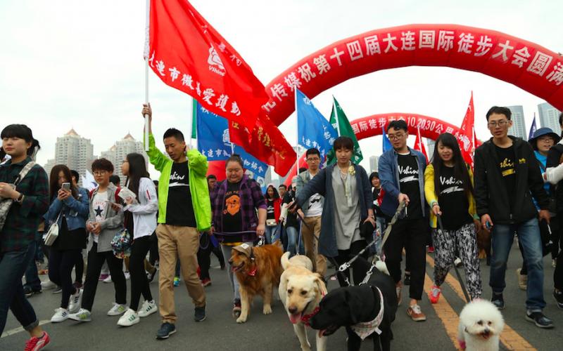 100 000 Cidadãos Chineses Protestam Contra Festival de Carne de Cão