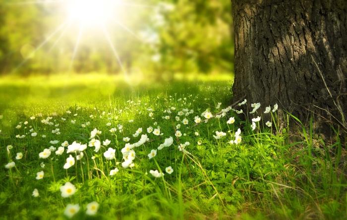 As plantas podem ter memórias que lhes dizem quando florescer