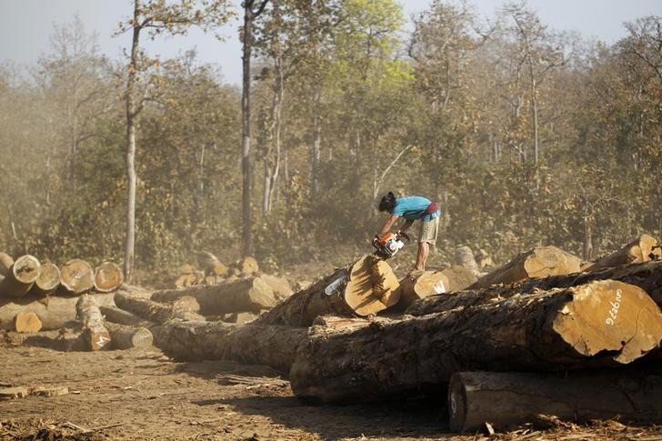 Myanmar Proíbe o Abate de Árvores Lucrativo para Preservar Florestas