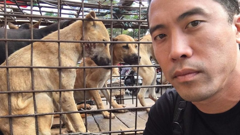 Marc Ching, o Homem que Arriscou a Vida para Salvar Mil Cães do Festival de Yulin