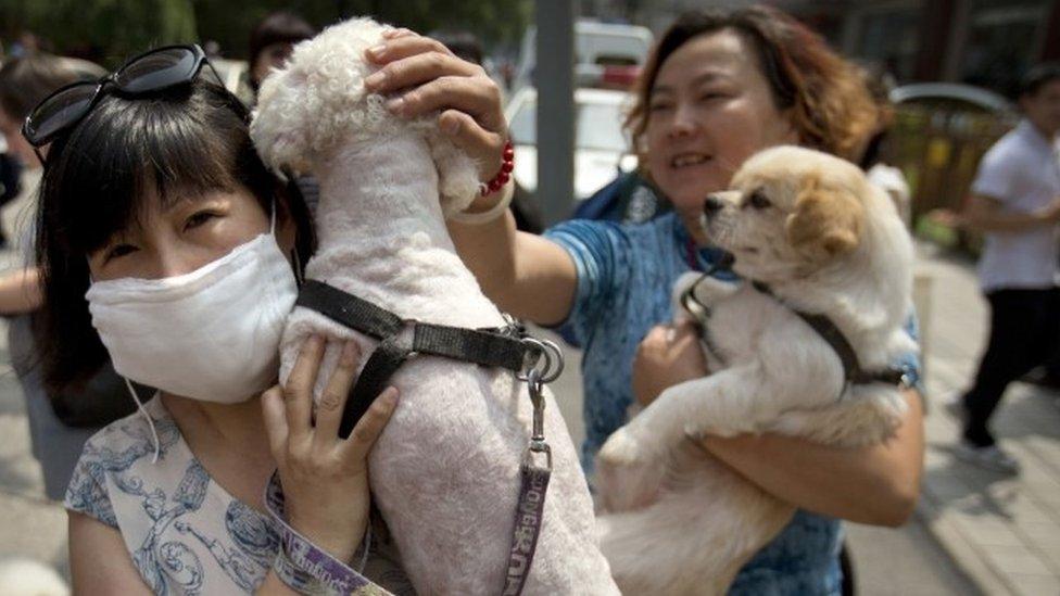 Petição com 11 Milhões de Assinaturas Contra Festival de Carne de Cão é Entregue em Pequim