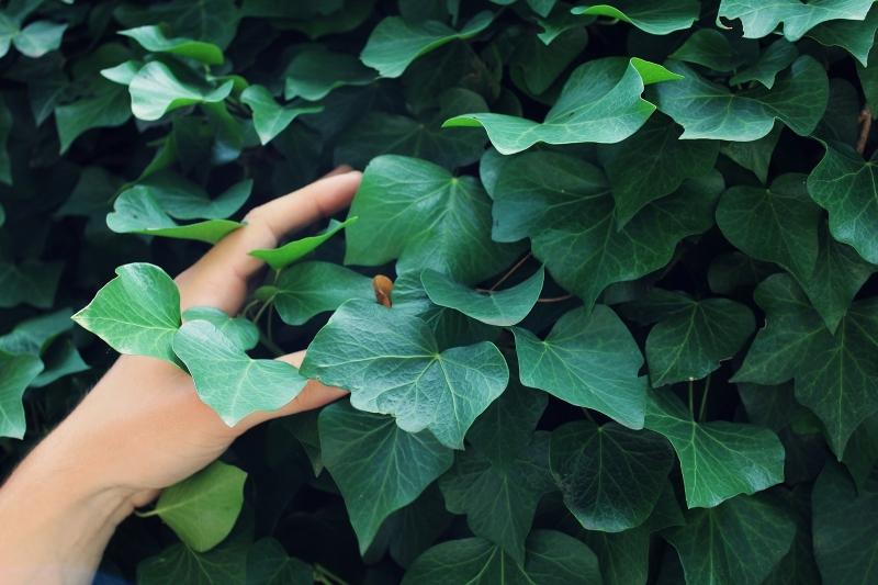 Novo Estudo Mostra que as Plantas Respondem ao Nosso Toque