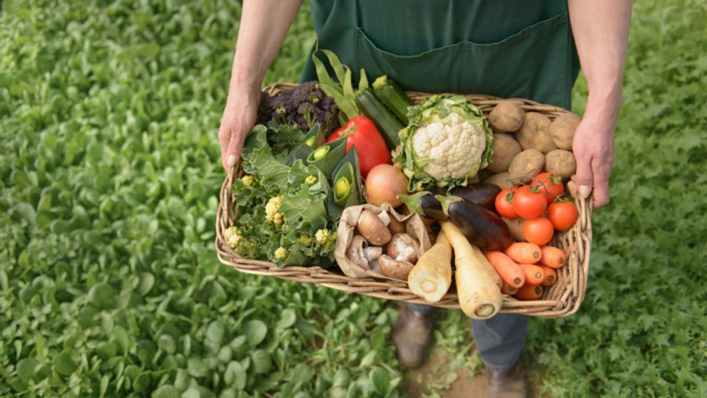 Governo Vai Apresentar até 31 de Outubro a Estratégia Nacional para a Agricultura Biológica