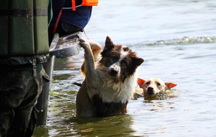 Heróis Salvam Cães e outros Animais Deixados para Trás nas Cheias no Texas