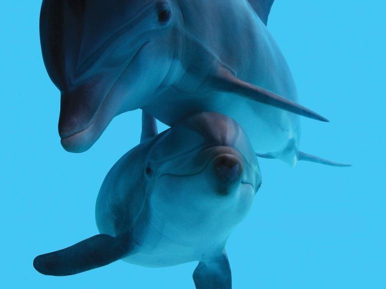 Golfinhos do Aquário de Baltimore Vão Ser Transferidos para Santuário Marinho