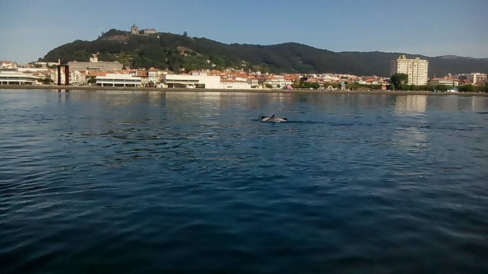 Golfinhos Avistados no Rio Lima – Viana do Castelo [Vídeo]