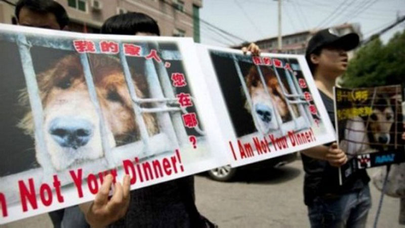 Ativistas manifestam-se contra o Festival de Yulin com cartazes