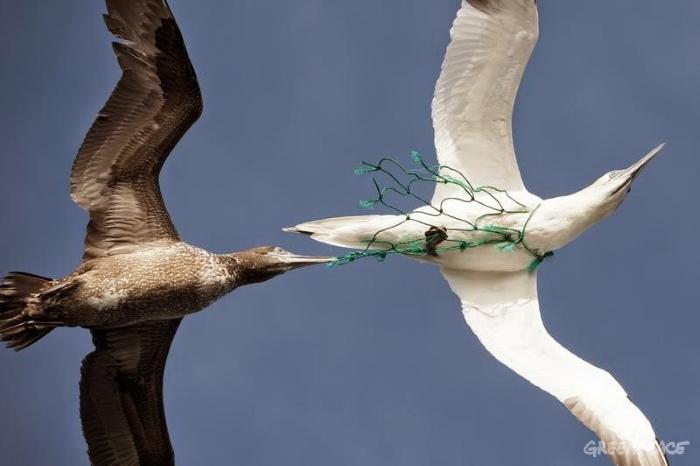Plástico Estará Presente em 99% das Aves Marinhas até 2050, Segundo Estudo