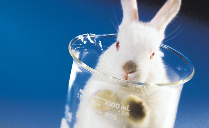 Governo da Austrália Vai Banir Cosméticos Testados em Animais