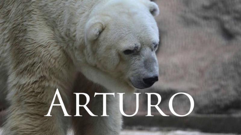 Morreu o 'Urso Polar Mais Triste do Mundo' – Arturo